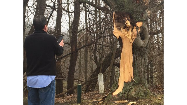 Damaged tree in Durand Eastman has many thinking of the White Lady