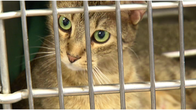 $5M in funding available to improve NY animal shelters