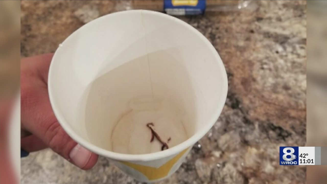 State, local officials investigating Lyons McDonald's restaurant after worms found in drink cups