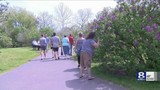 Officials mark start of Lilac Festival in Rochester